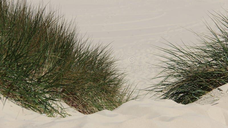 Sandy Way With Green Grass arkivfoton