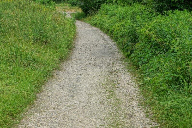Sandy-Weg unter grünem Gras und Vegetation im Park stockfotografie