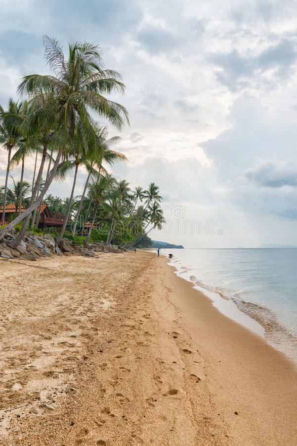 Download Sandyr Beach At Evening With Coconut Palm Trees Line Editorial Photo - Image: 98764471