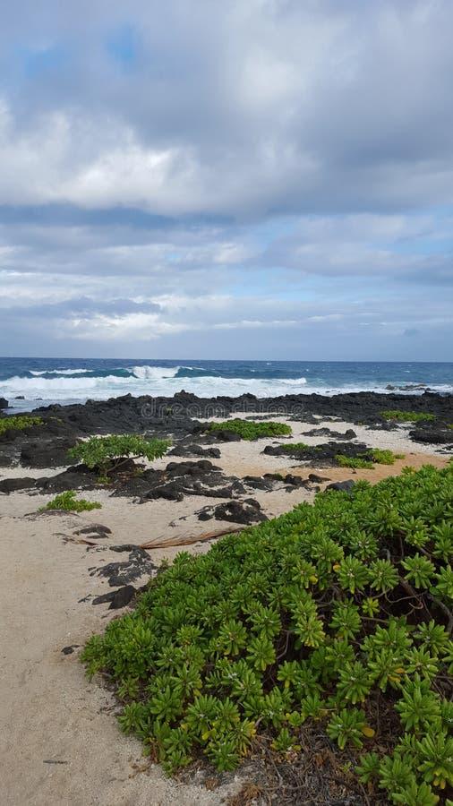 Download Sandys arkivfoto. Bild av hawaiibo, kust, härlig, paradis - 78726794