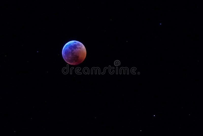 Sang superbe Wolf Moon en janvier photo stock