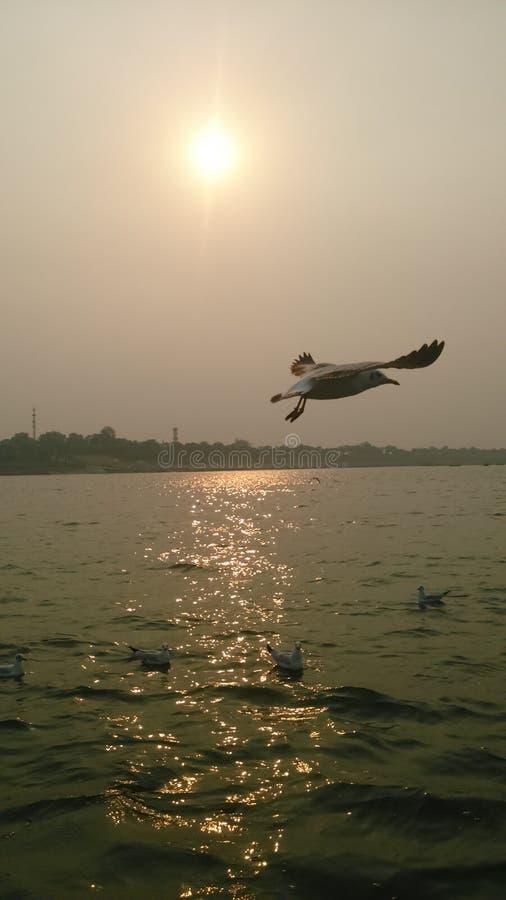 Sangam Allahabad перелётных птиц @ стоковая фотография