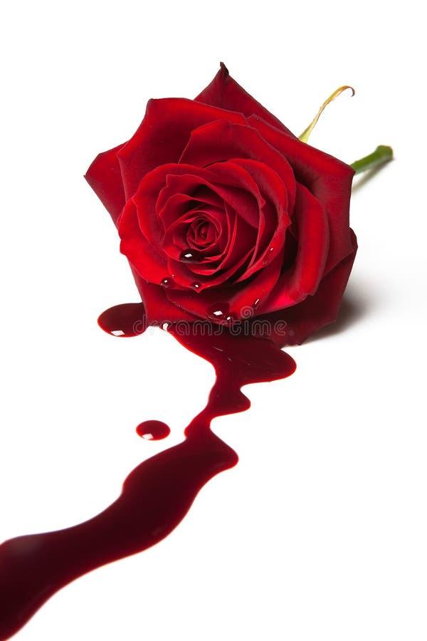 Sangrar levantou-se imagem de stock royalty free