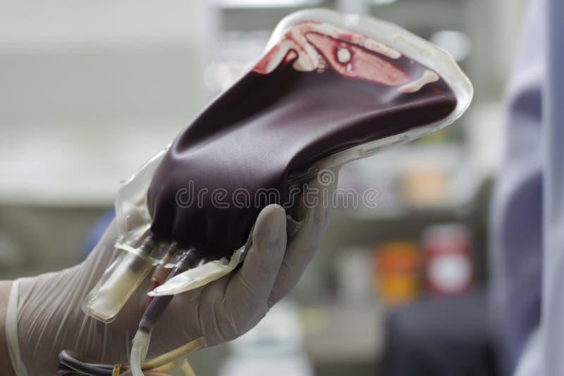 Sangue nella borsa del sangue per il paziente fotografia stock