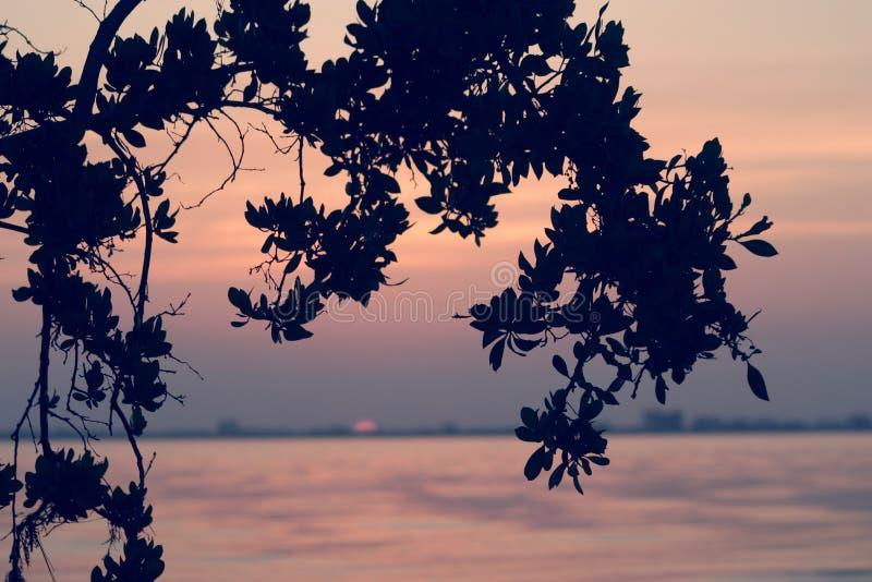 Sanibel Wschód Słońca Fotografia Stock