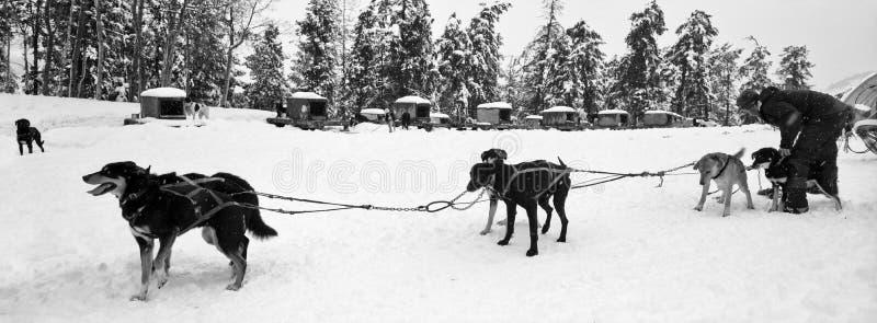 Sanie psia Drużyna obrazy stock