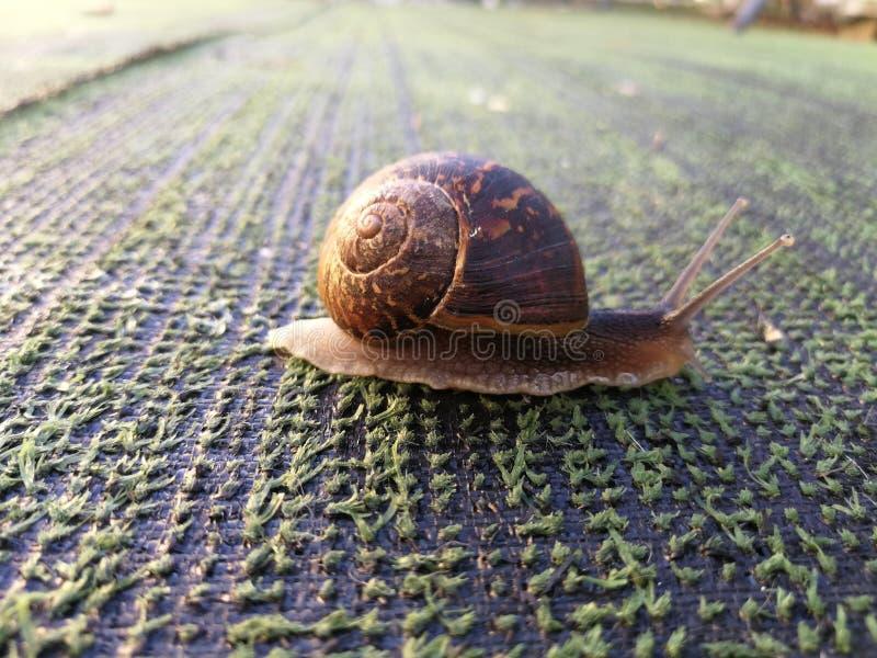 Sanil gress. Dav, snail, grass, alittlesnail stock image