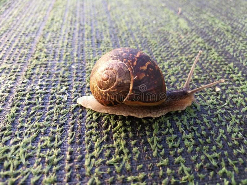 Sanil gress. Dav, snail, grass, alittlesnail royalty free stock images