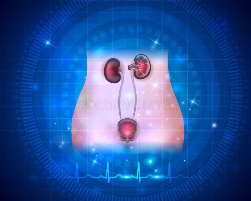 Sanità del sistema urinario illustrazione vettoriale