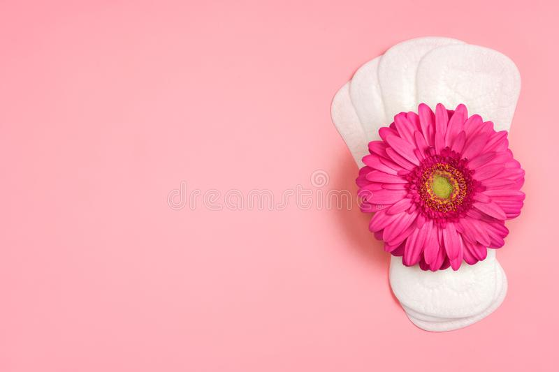 Daily sanitary napkins with gerbera flower on pink background. Concept of critical days, menstruation royalty free stock photo