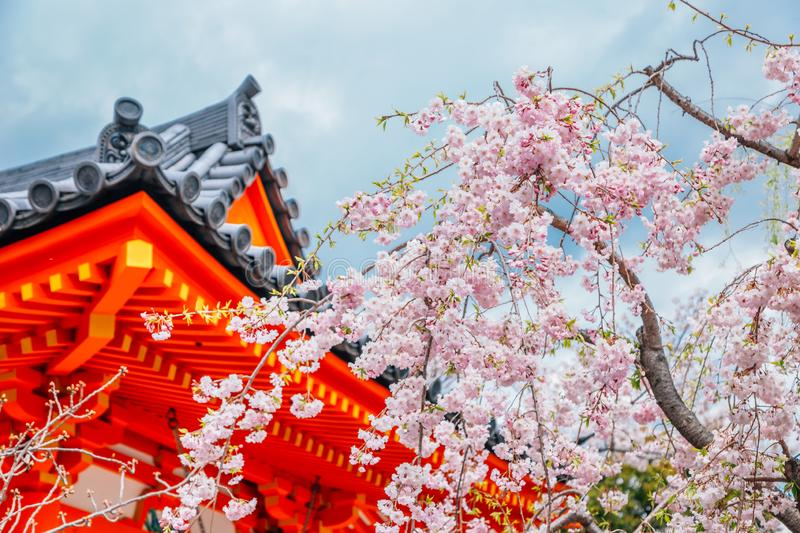 Sanjusangendo Temple with cherry blossom in Kyoto, Japan. Sanjusangendo Temple with cherry blossoms in Kyoto, Japan stock image