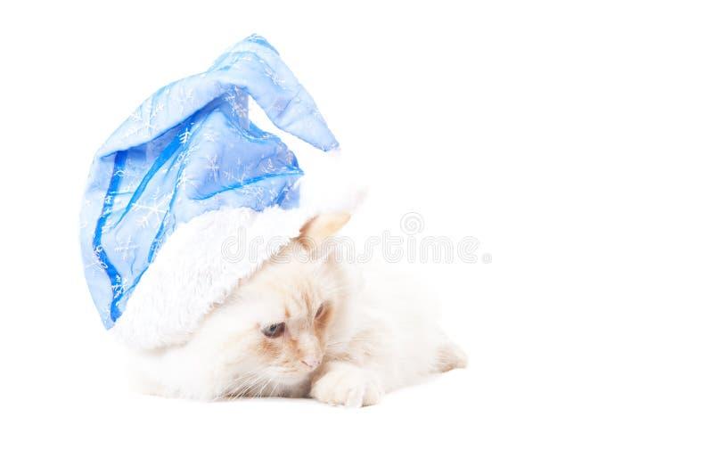 Sankt-Katze lizenzfreie stockbilder