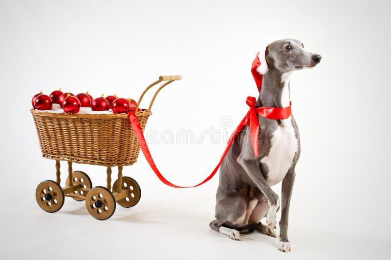 Sankt whippet mit Weihnachtswagen lizenzfreies stockfoto