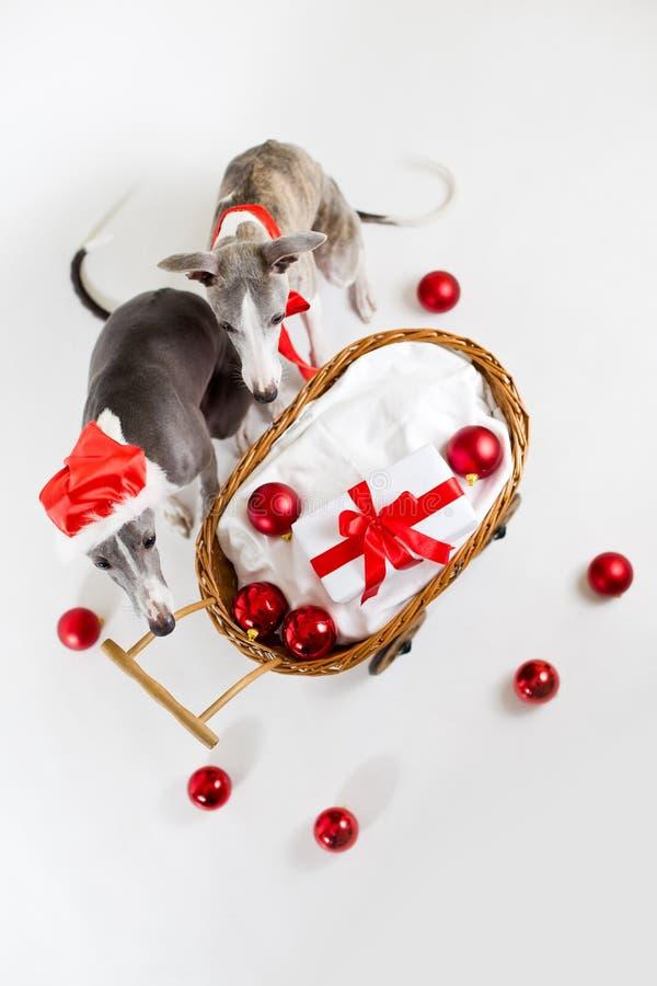 Sankt whippets mit Weihnachtswagen lizenzfreies stockbild