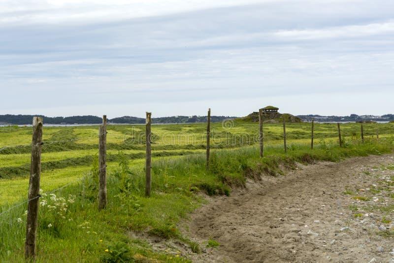 Sanktuarium ptasie w Norwegii obraz royalty free