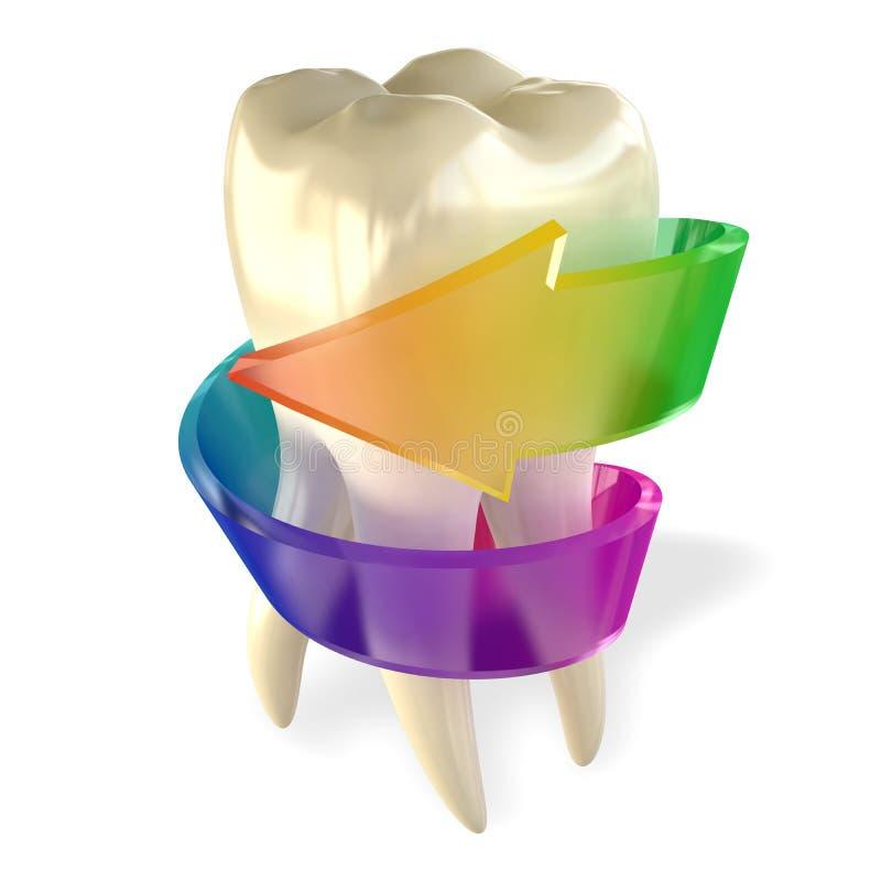 Sano molare del dente isolato su bianco immagine stock