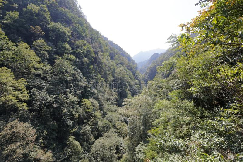 sanqingshan山,多孔黏土rgb的豪华的植被 库存照片