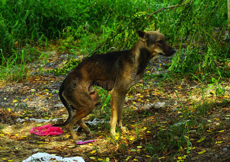 Sans-abri affamé de chien égaré photographie stock libre de droits