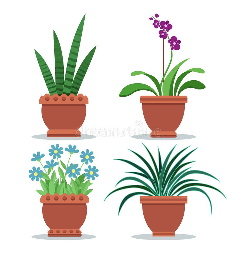 Sansevieria Izbowej rośliny Ustalona Wektorowa ilustracja royalty ilustracja