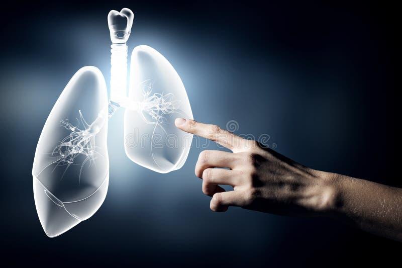 Santé de poumons photo stock