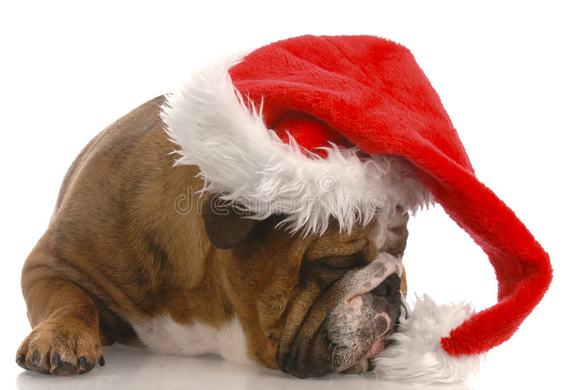 santa σκυλιών τοποθέτησης στοκ εικόνες με δικαίωμα ελεύθερης χρήσης