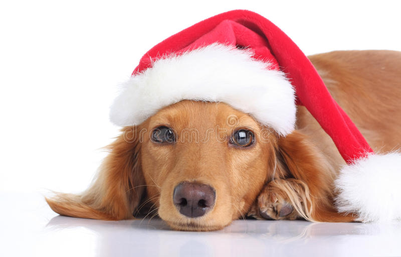 santa σκυλιών στοκ φωτογραφίες με δικαίωμα ελεύθερης χρήσης