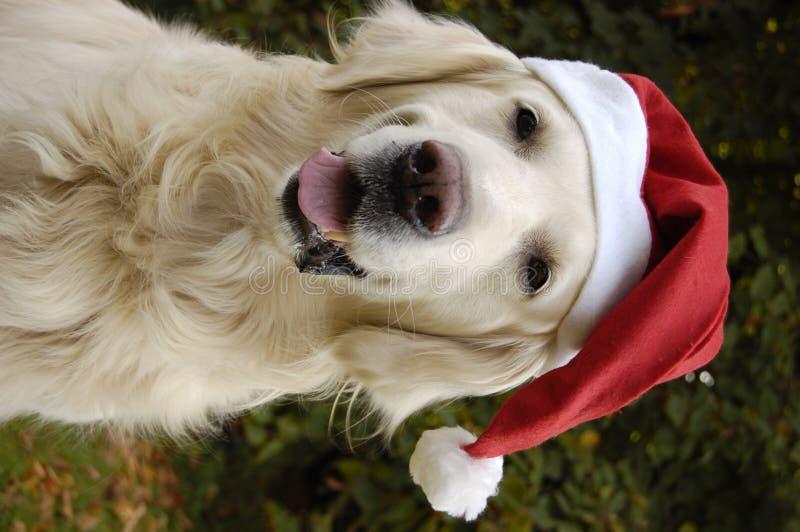 santa σκυλιών s στοκ φωτογραφία με δικαίωμα ελεύθερης χρήσης