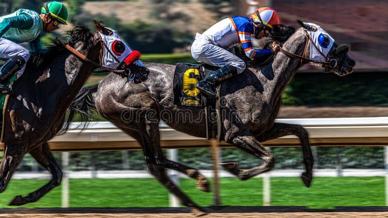 Santa Anita Park Horse Racing fotografering för bildbyråer