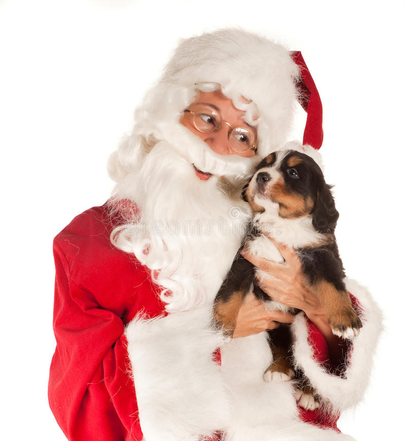 Santa avec le crabot images libres de droits