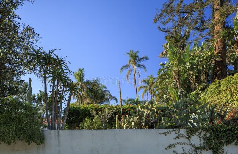 Santa Barbara tyły ogród z tynk ścianą zdjęcie stock