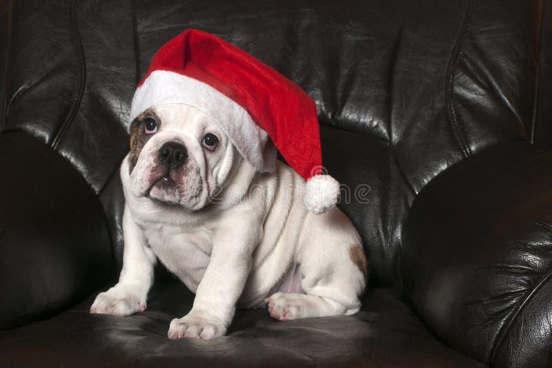 Santa Bulldog royalty-vrije stock foto's