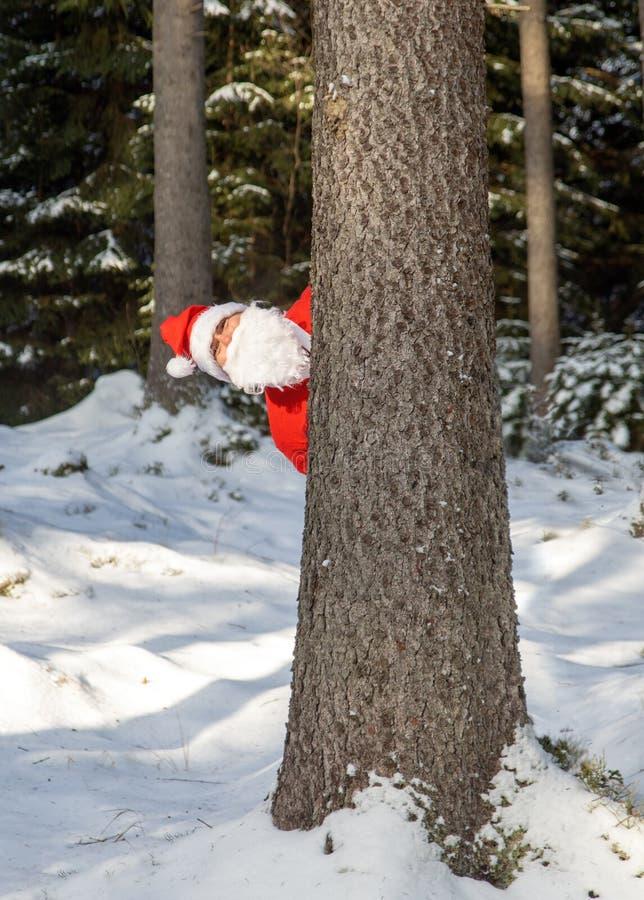 Santa Claus-Blick hinter schneebedecktem Baum stockfotos