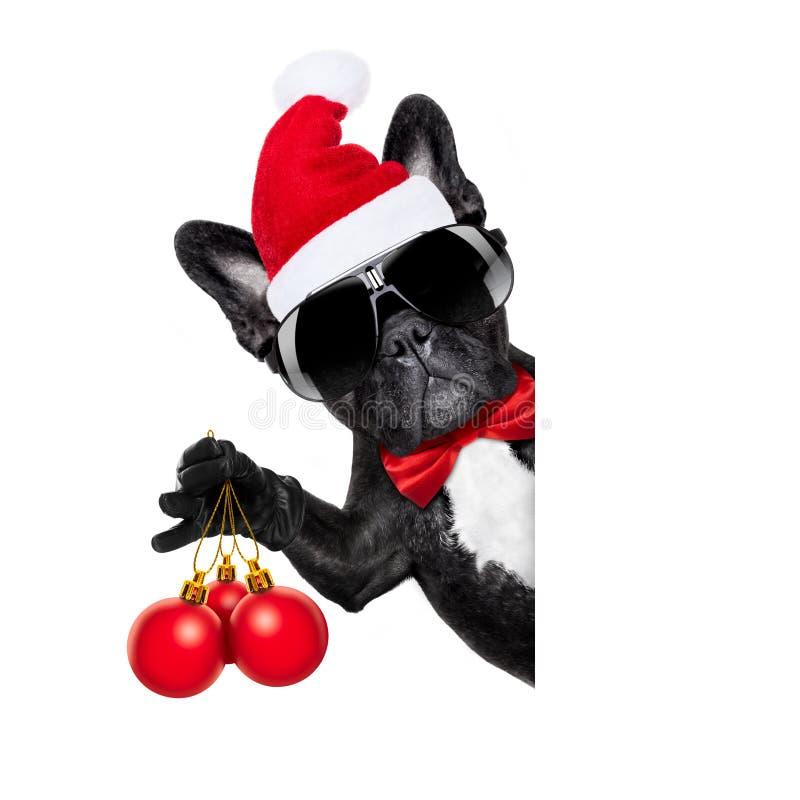 Santa claus christmas dog. Isolated on white background, holding xmas decoration balls isolated on white background royalty free stock photo