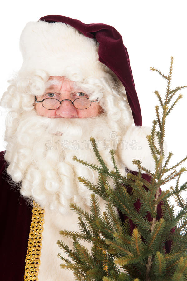 Santa Claus with Christmas tree. Isolated over white background royalty free stock images
