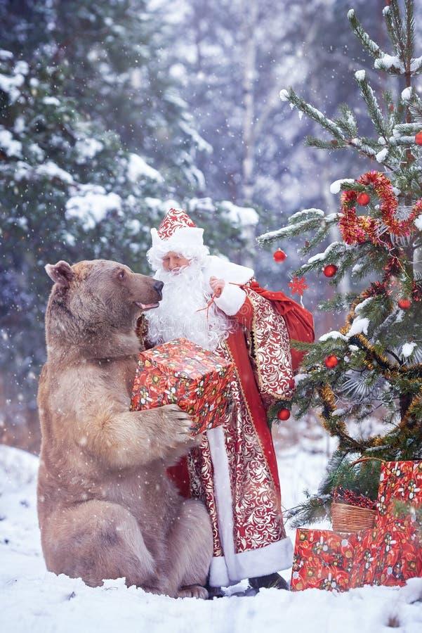 Santa Claus ger julklapp till brunbj?rnen royaltyfri fotografi