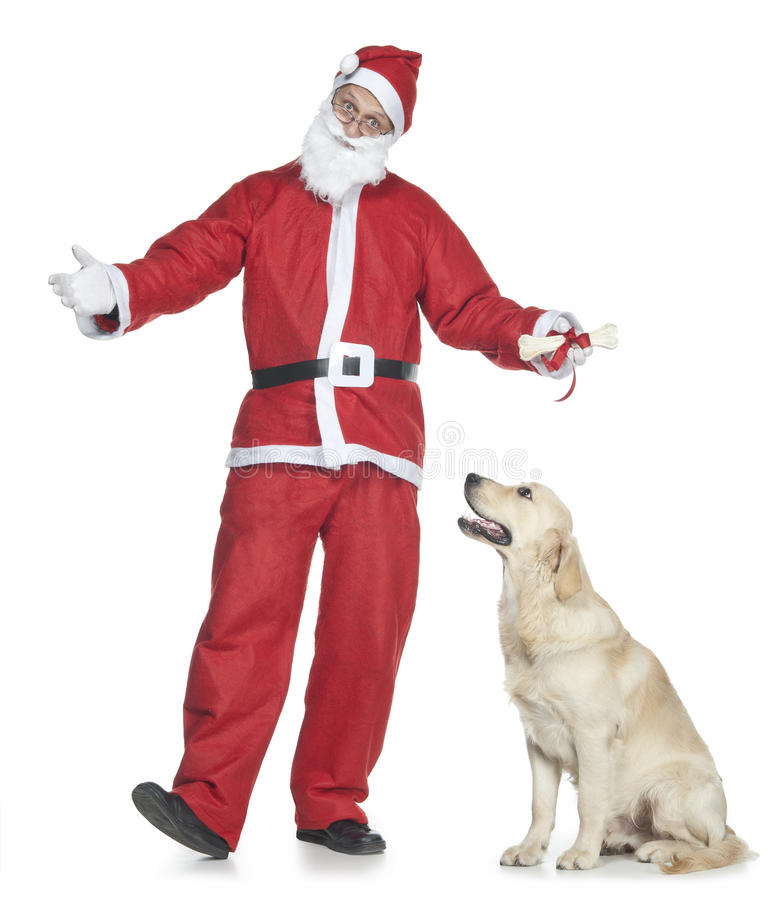 Santa claus with golden retriever royalty free stock photography