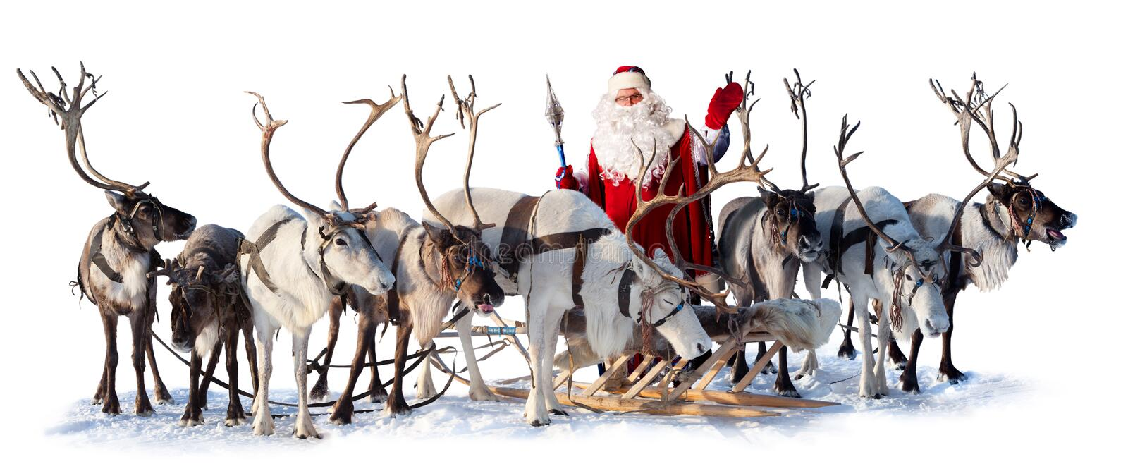 Santa Claus and his deer. Santa Claus are near his deer in harness on the white background. He welcomes you and is waving his hand royalty free stock images