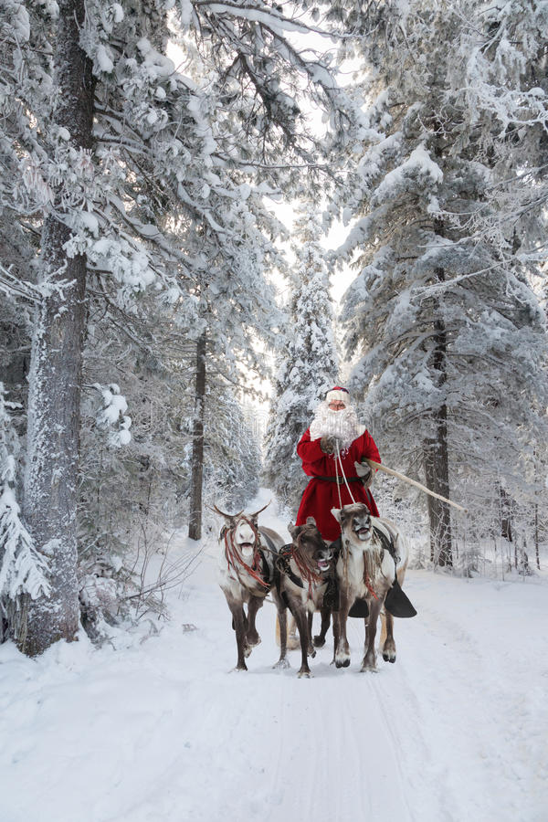 Santa Claus and his reindeer in forest royalty free stock photography