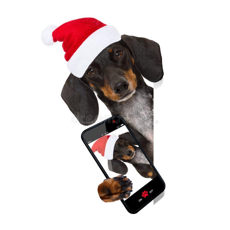Santa Claus hund på julferier royaltyfri bild