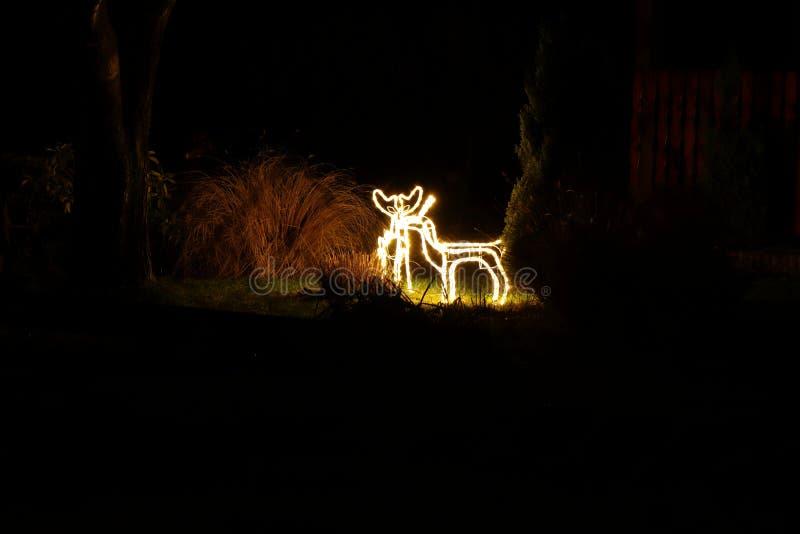 Santa clausmali renifery tworzyli od małych żarówek zaświeca na ogródzie obrazy royalty free