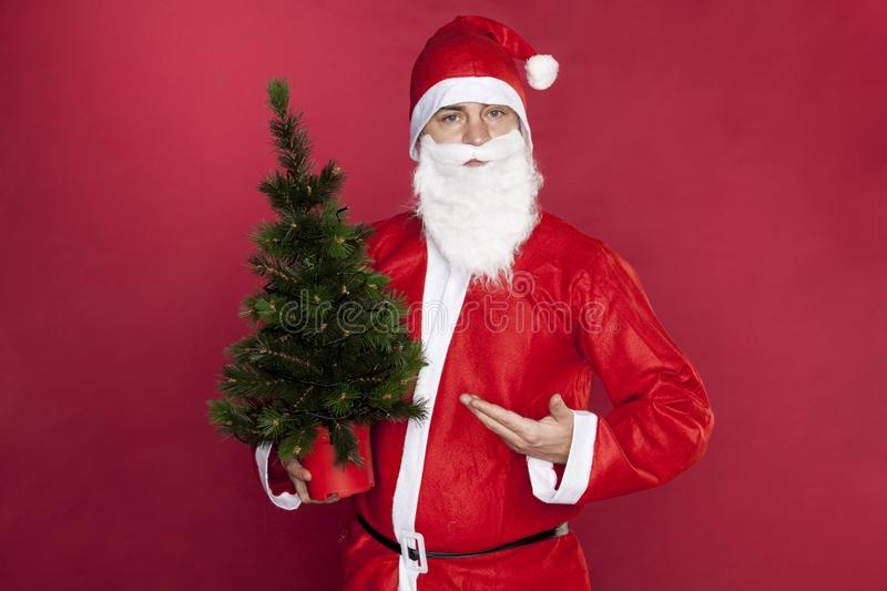 Santa Claus points to the perfect Christmas tree stock image