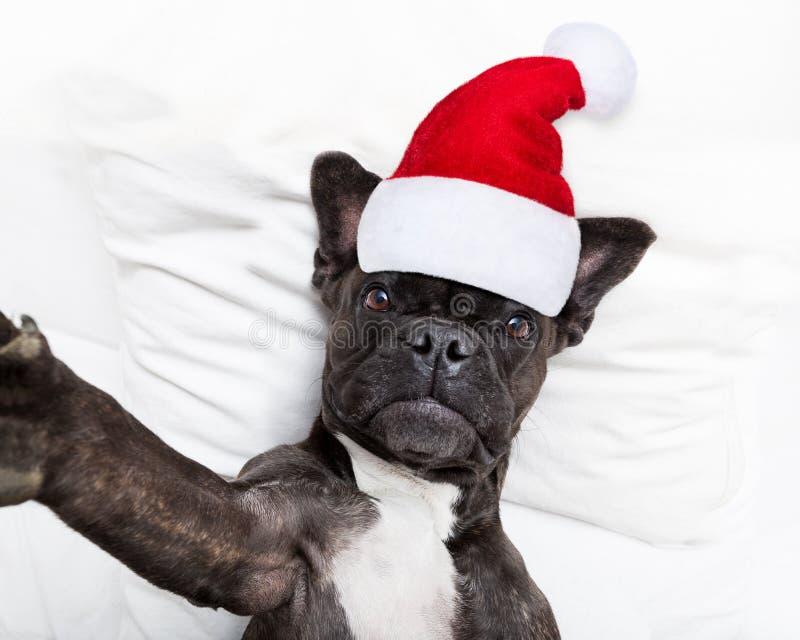 Santa Claus selfiehund royaltyfri fotografi