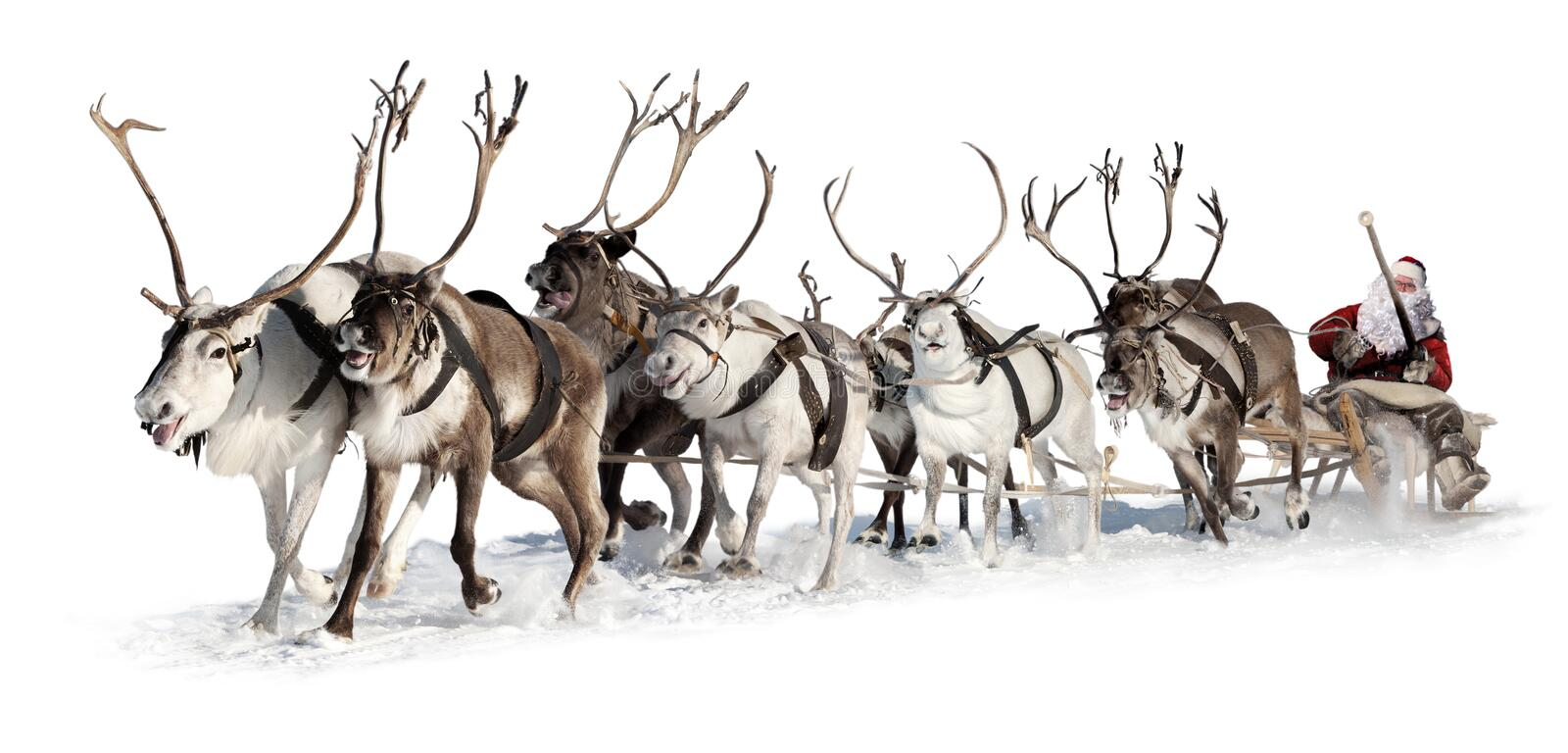 Santa Claus in a sleigh. Santa Claus rides in a reindeer sleigh. He hastens to give gifts before Christmas. This is fast team of eight deer royalty free stock photography