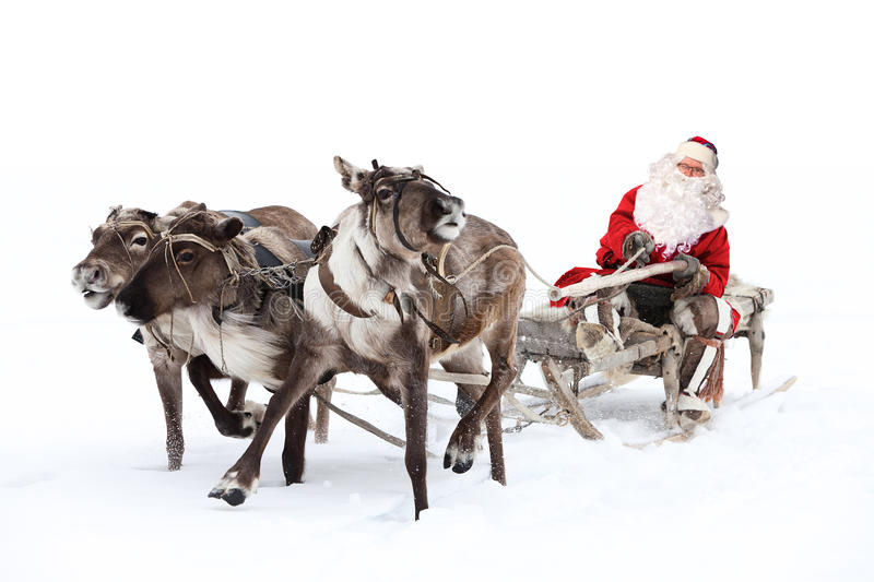 Santa Claus in a sleigh. Santa Claus rides in a reindeer sleigh. He hastens to give gifts before Christmas. This is fast team of three deer royalty free stock image