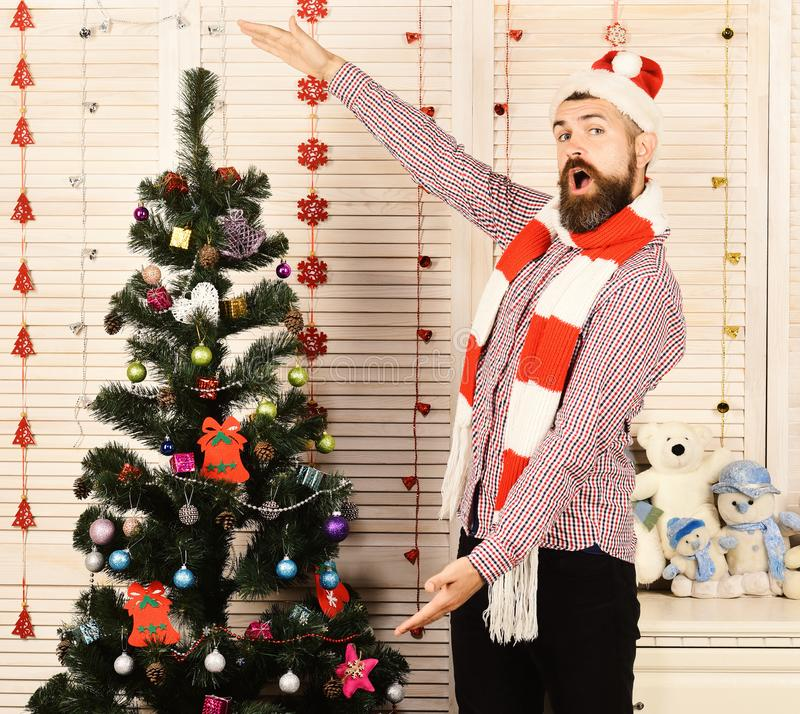 Santa Claus with surprised face on wooden wall background. Celebration and New Year decor concept. Man with beard in hat and scarf shows size of fir tree. Guy stock images