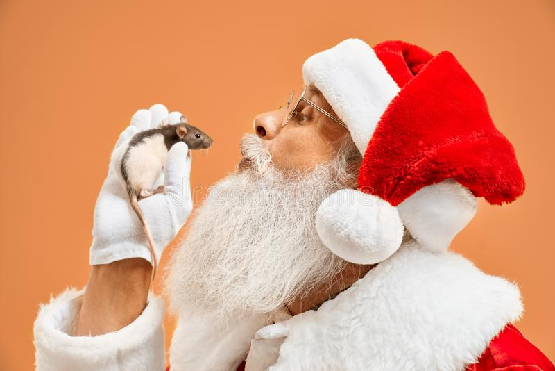 Santa Claus trying to kiss little white mouse in his hand royalty free stock images