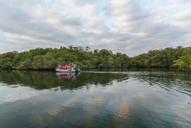 Santa Cruz, Galapagos/Ecuador - 25 mars 2018: En turistbåt på Black turtle Cove, Santa Cruz, Galapagos-öarna royaltyfria bilder