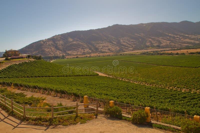 Santa Cruz-wijngaard, Chili stock afbeelding