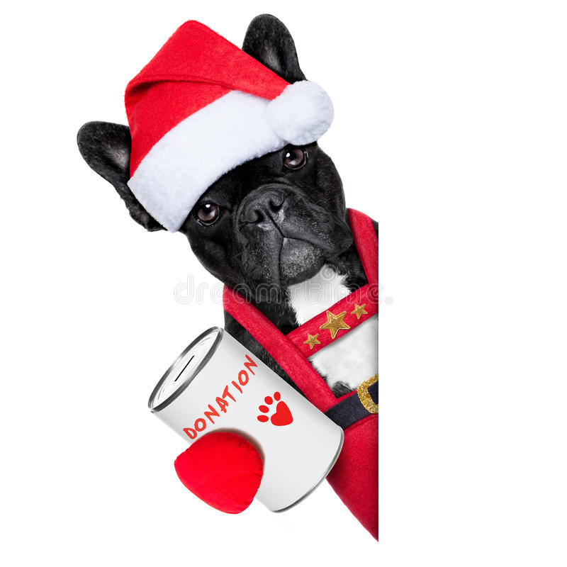 Santa dog. Reindeer french bulldog with a donation can , collecting money for charity, as a winter edition , isolated on white background royalty free stock photography