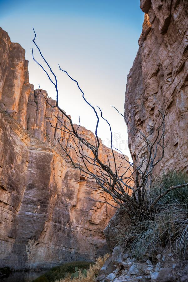 Santa Elena Canyon on the Rio Grand River in Big Bend National Park, Texas royalty free stock image
